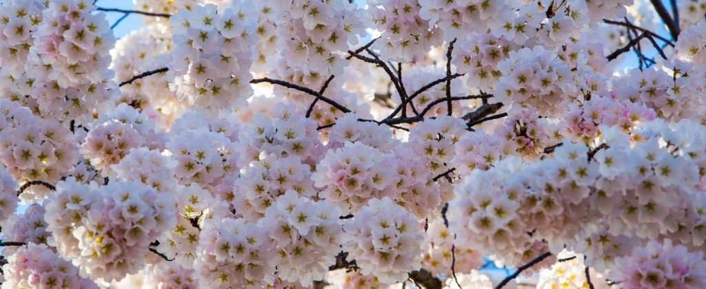 header printemps