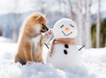 chien-bonhomme de neige