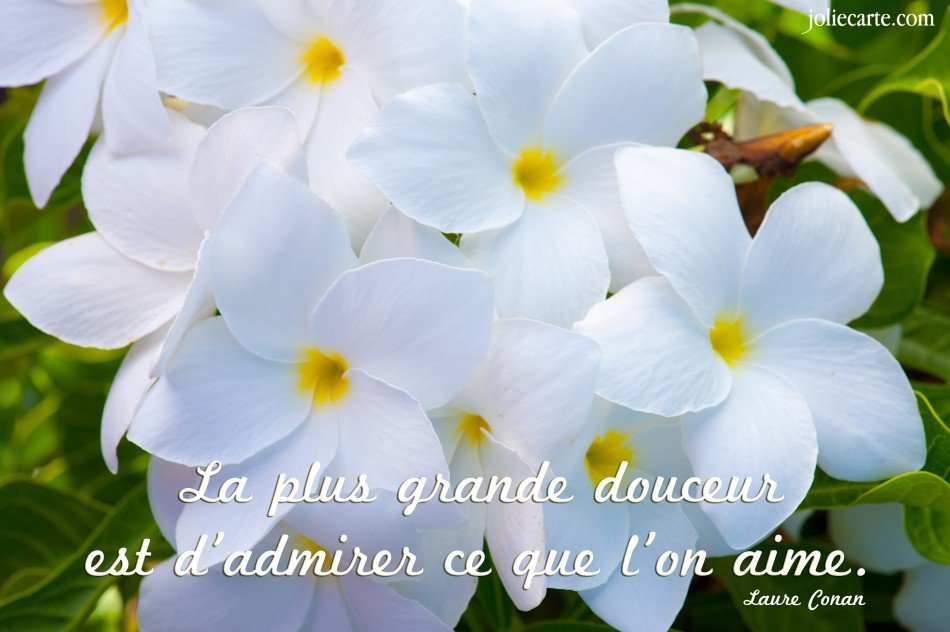 citation-douceur